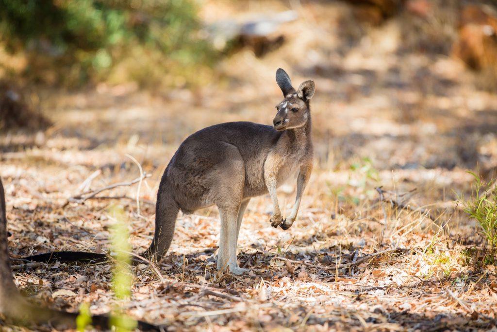 Choses à faire dans l'Outback australien