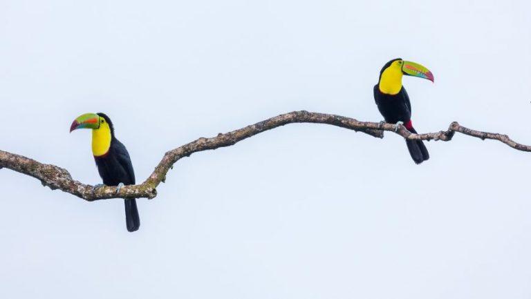 40 animaux étonnants du Costa Rica qui vous donneront envie de visiter maintenant