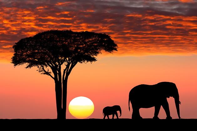 5 choses à considérer avant de partir en voyage safari africain