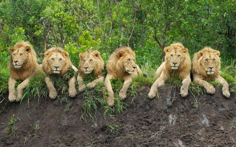 COVID-19 Impact sur la conservation de la faune en Afrique