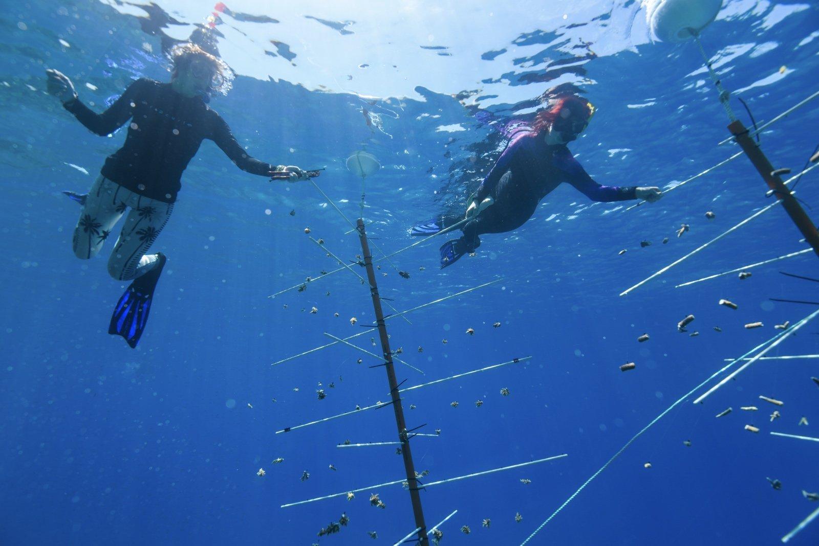 Les plongeurs au travail sur la pépinière de corail de la Grande Barrière de Corail