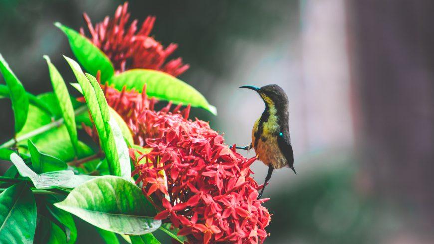 Découvrez les meilleurs conseils pour observer les oiseaux débutants