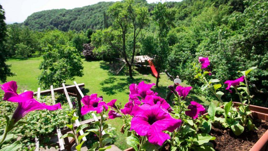 Na Okić - une oasis forestière privée