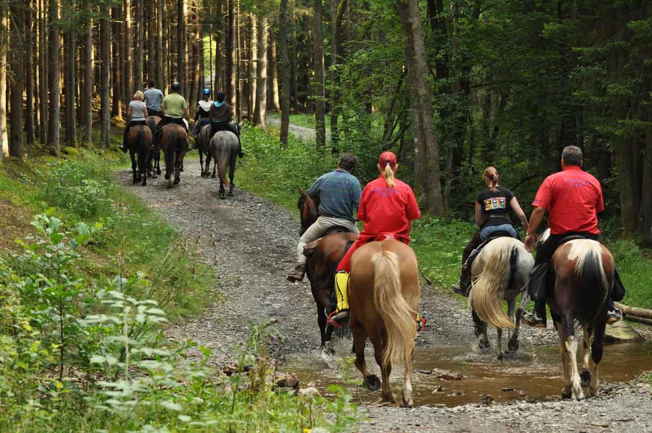 Equitation Glenworth Valley NSW Australie