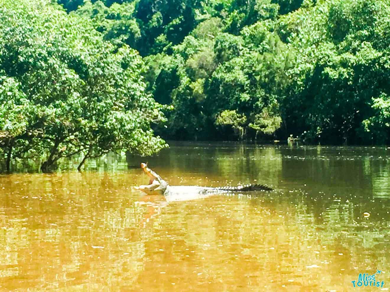 activités de crocodile à port douglas