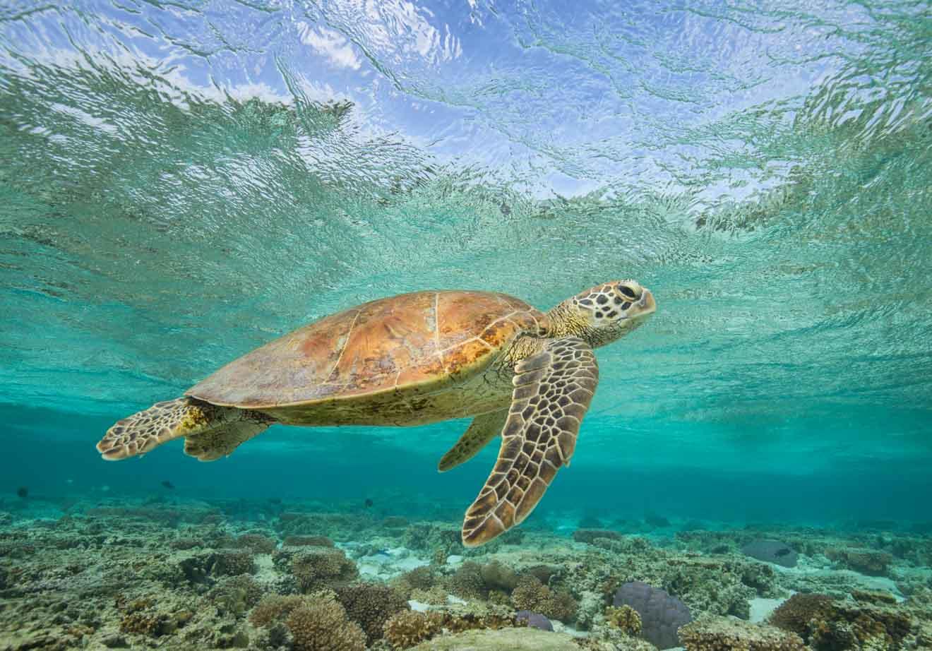 tortue de mer à port douglas