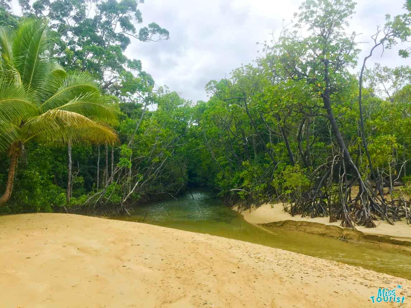 choses à faire dans la forêt tropicale à port douglas