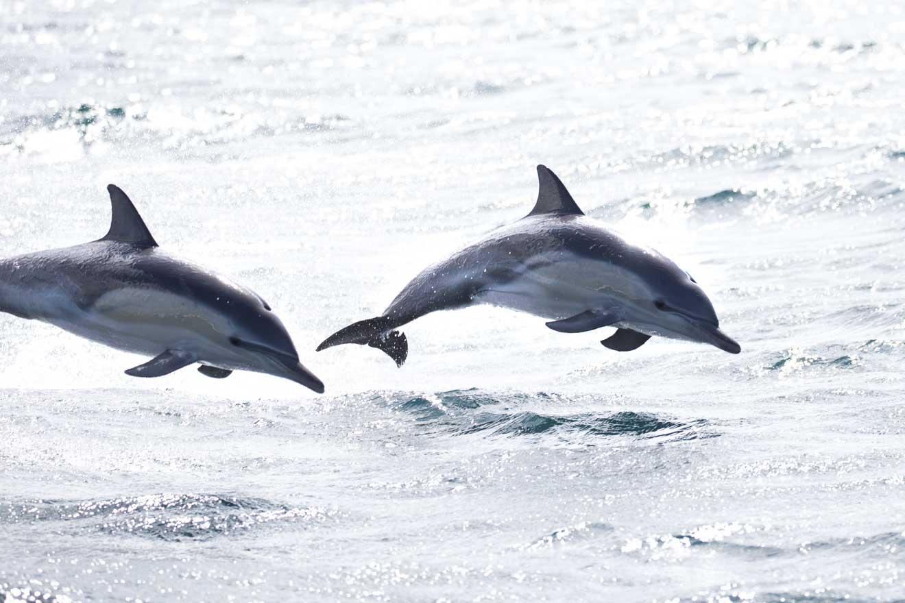 Randonnée dans la baie des feux des dauphins communs