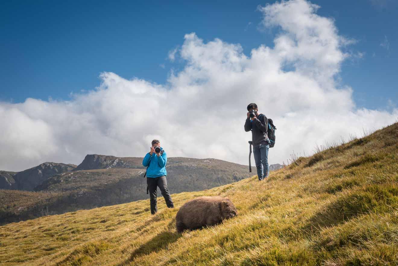 Photographier une piste de wombat Overland pour le blog