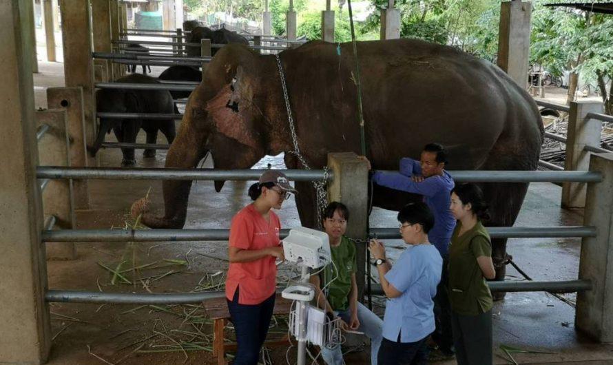 Garder les éléphants en bonne santé sous le nuage de COVID-19