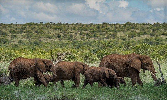 Les États africains luttent contre le COVID-19 avec des budgets à faible conservation de la faune