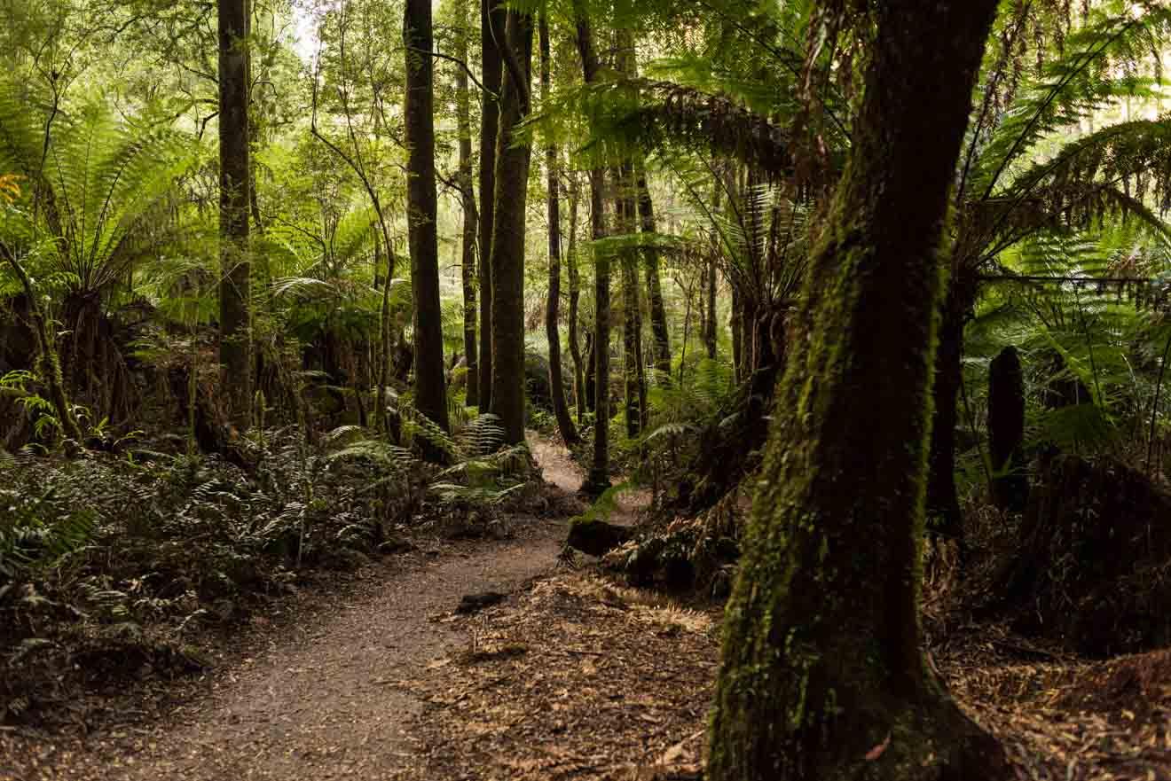 grands secrets cachés de la route de l'océan - Great Otway Park