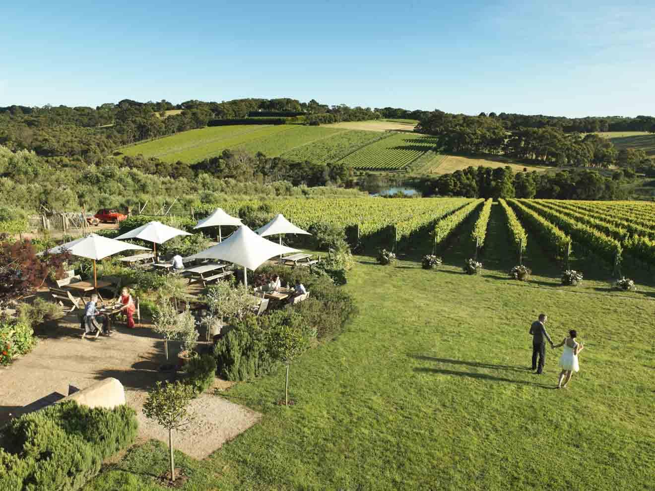 idées de rendez-vous - Montalto Vineyard and Olive Grove Que faire à Mornington Peninsula?