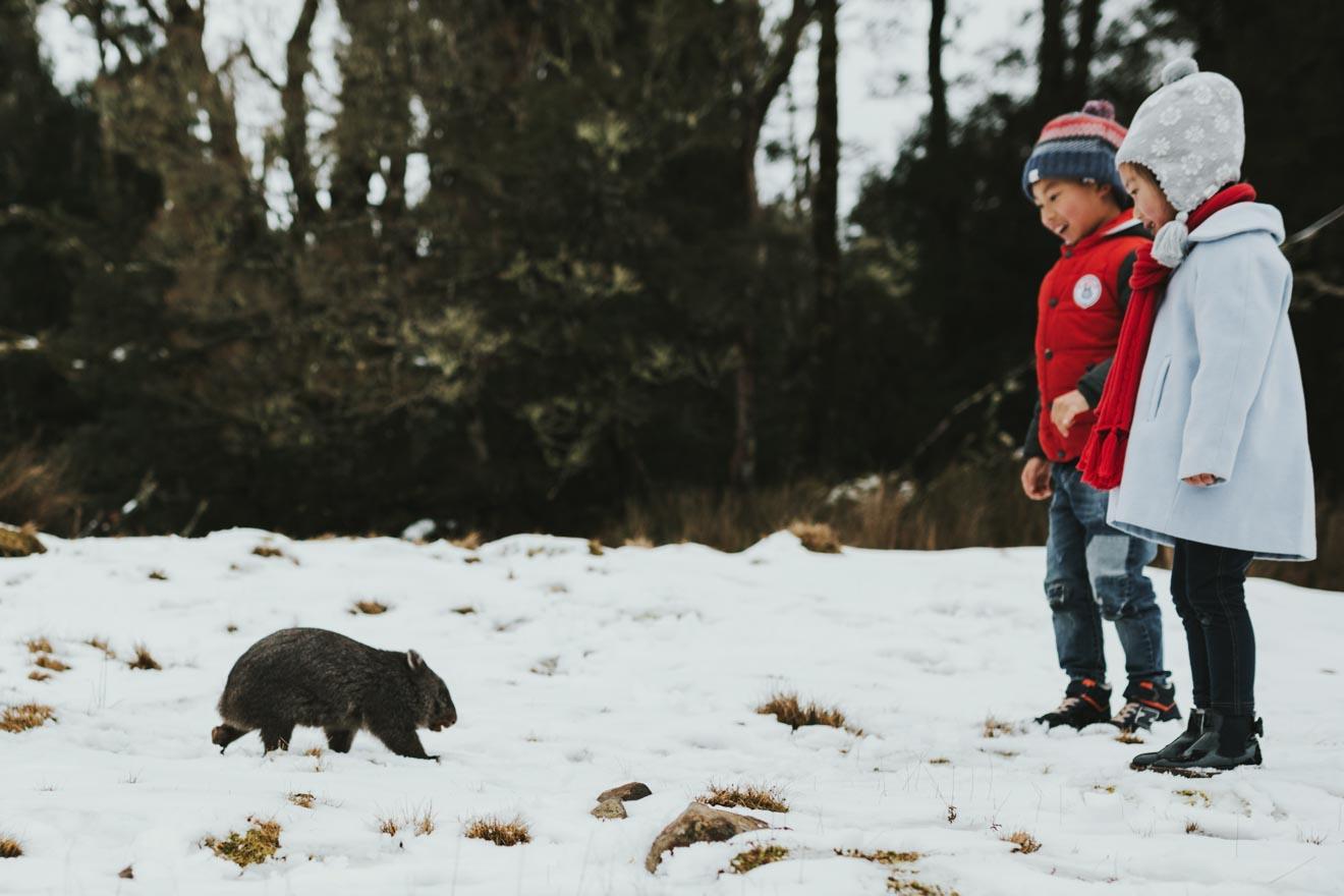 saison de neige de Cradle Mountain - Devils @ Cradle