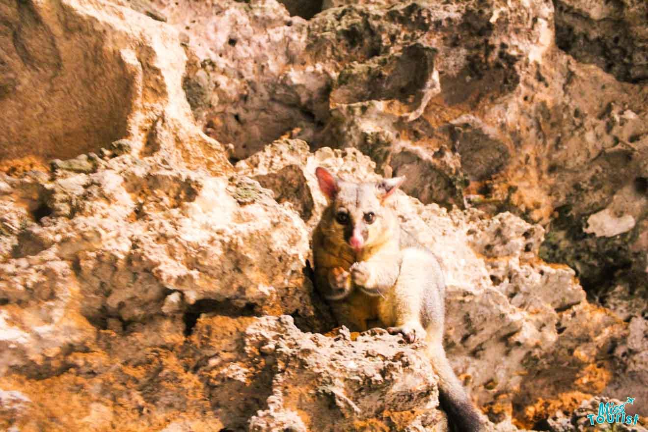 Mount Gambier: 50 activités à faire - Possum
