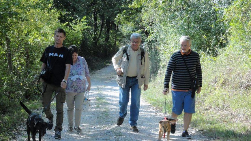 expériences écologiques en Istrie: randonnées avec des chiens de refuge