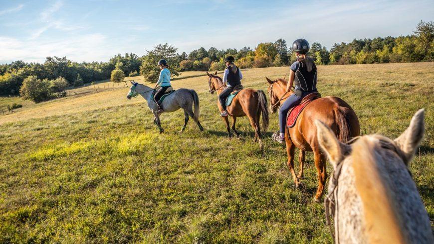 expériences écologiques en Istrie: équitation