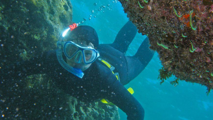 expériences respectueuses de l'environnement en Istrie: sentier sous-marin éducatif dans le parc national de Brijuni