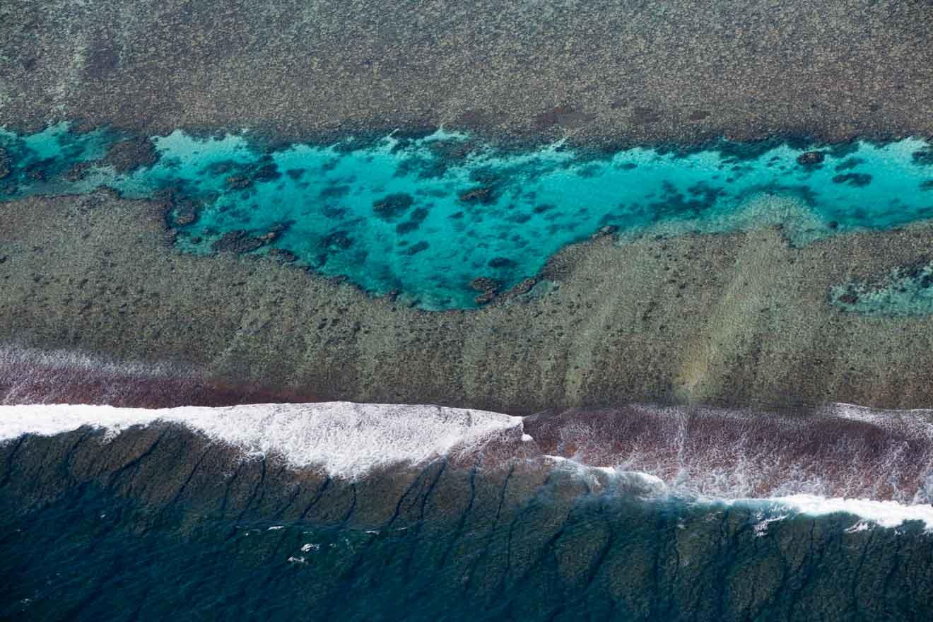 Reef littoral Whale sharks meilleur moment pour visiter le récif de ningaloo