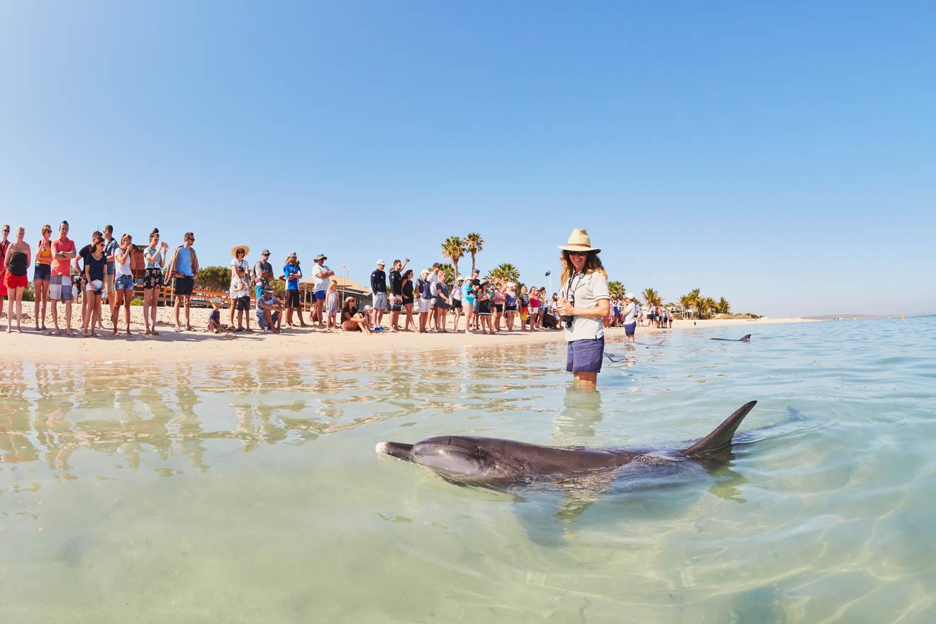 RAC Monkey Mia Dolphins regardant les choses à faire à Shark Bay