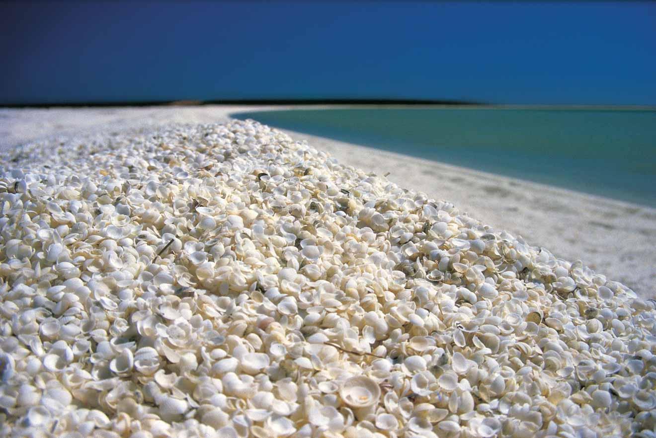 Shell Beach Choses à faire dans la baie de requin et frais d'entrée de singe mia