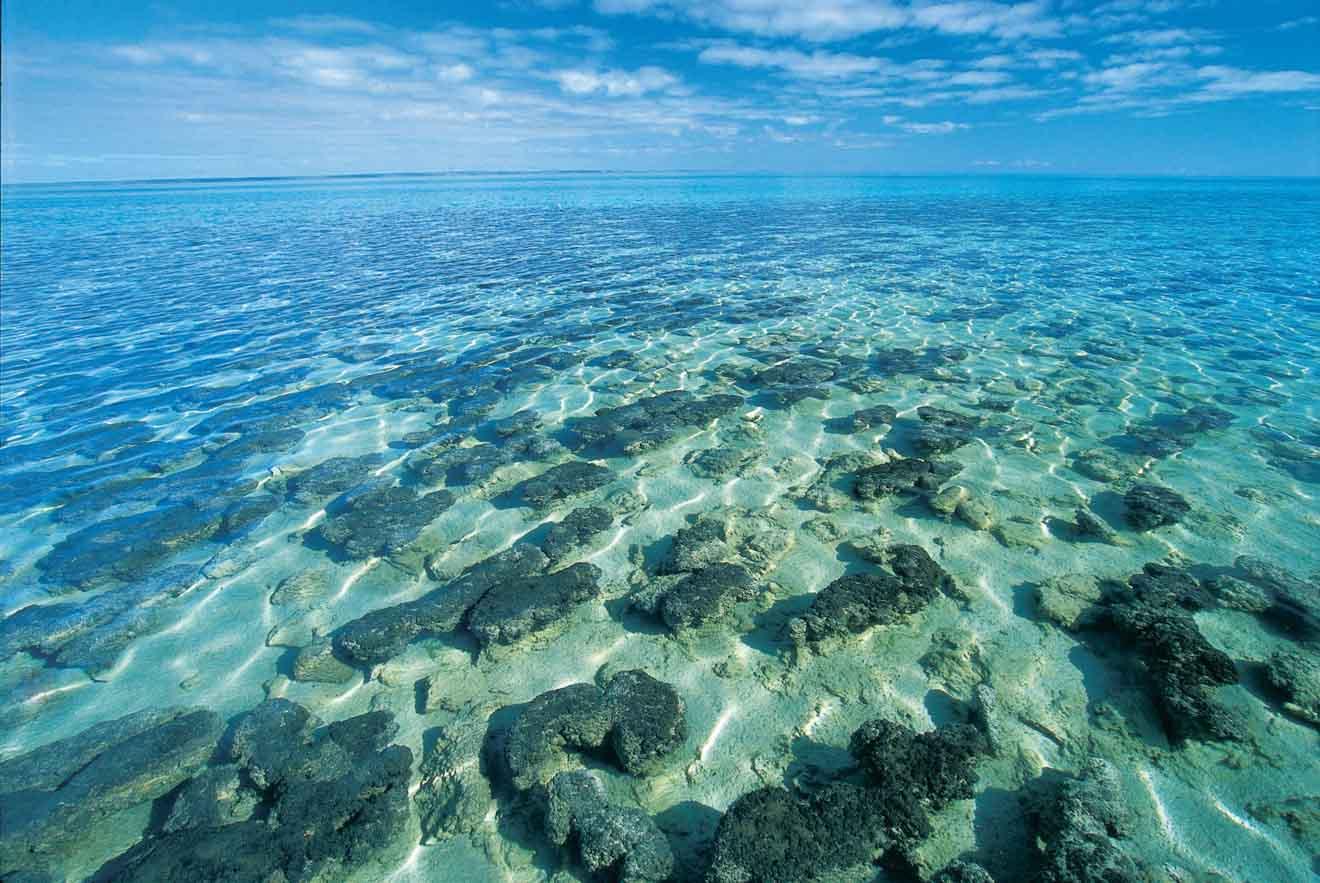 Stromatolites à Hamelin Pool Que faire à Shark Bay?