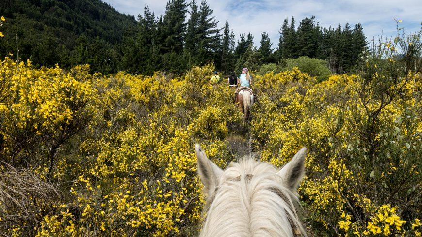 équitation pendant vos vacances vertes