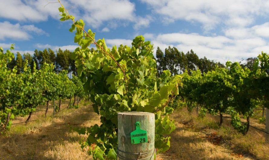 La liste des 6 meilleurs vignobles de Margaret River à ne pas manquer!