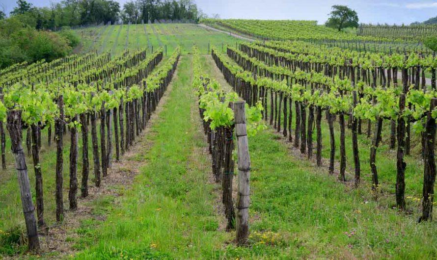 La liste des 7 meilleurs vignobles de Swan Valley que vous NE POUVEZ PAS manquer!