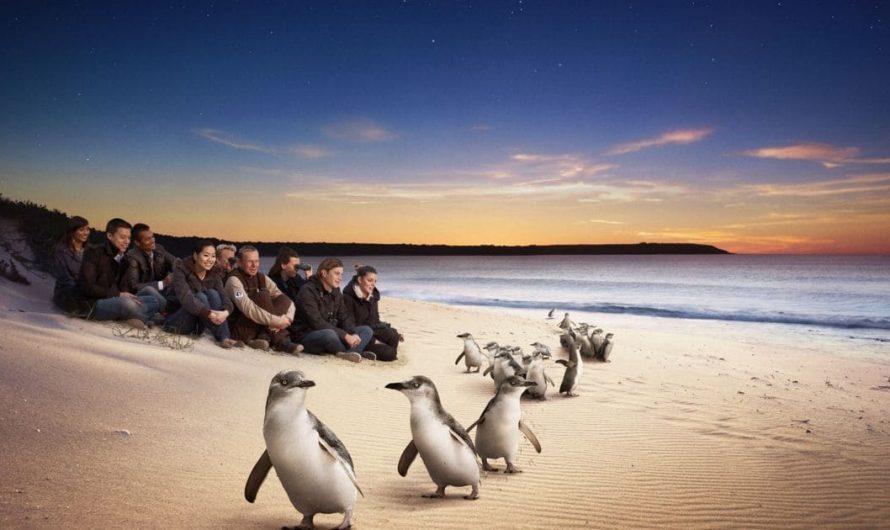 DOIT LIRE – 6 choses amusantes à faire à Phillip Island, VIC, Australie