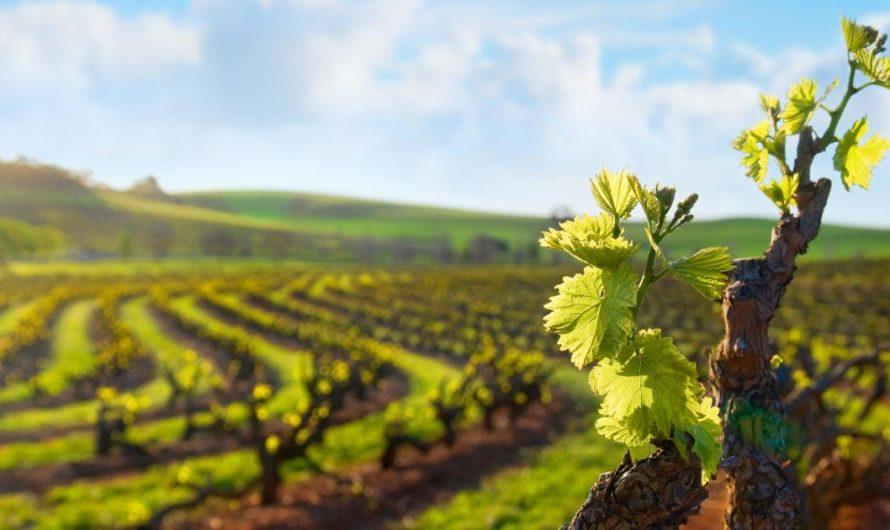 DOIT LIRE – 11 choses à faire dans la vallée de Barossa (ce ne sont pas seulement des vignobles)