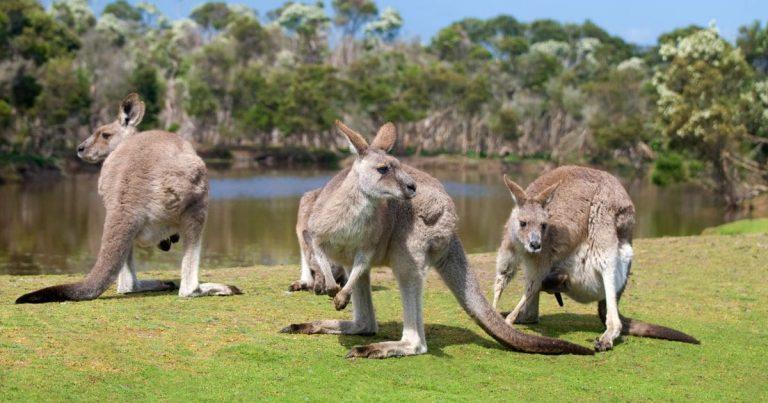 11 meilleures choses à faire à Kangaroo Island qui vous impressionneront!