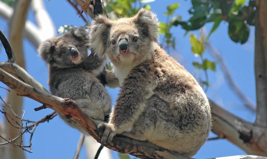 9 choses incroyables à faire sur la Sunshine Coast (+3 meilleures attractions pour les familles!)