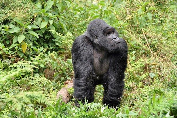 La réouverture du Rwanda favorise le tourisme national et régional
