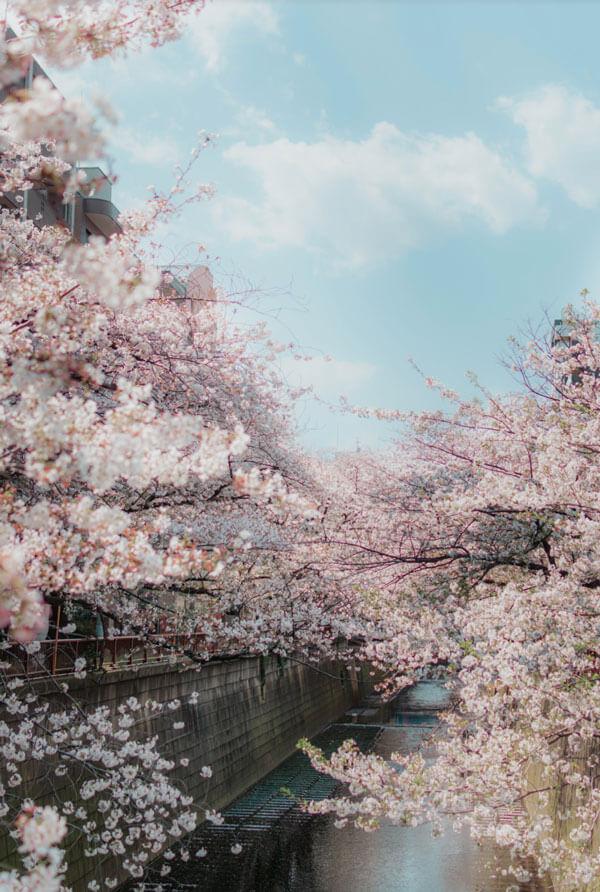 Nakameguro, Tokyo au printemps au Japon