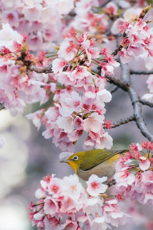 Profiter du printemps au Japon: où aller, quoi emporter (et comment éviter les foules)
