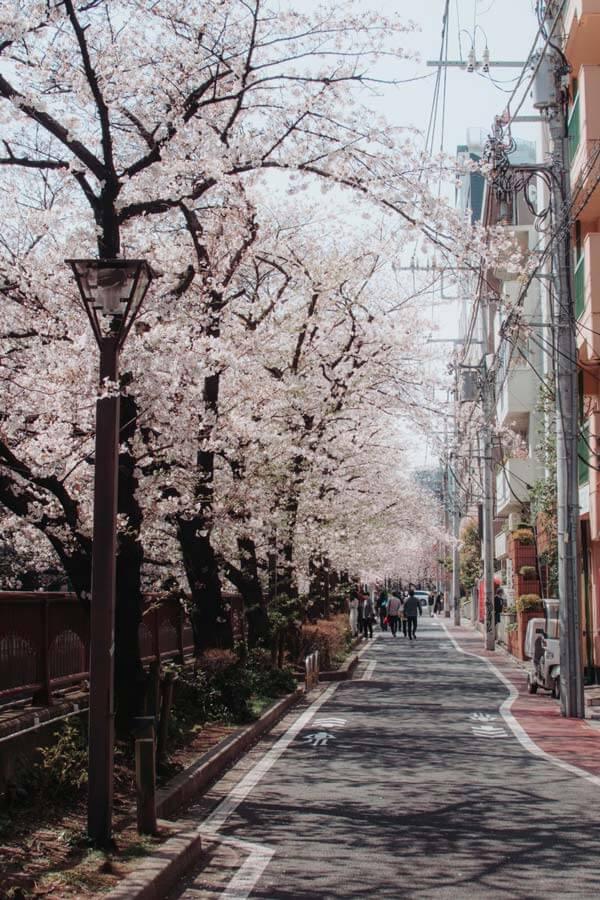 Le Japon au printemps: Nakameguro Street, Tokyo