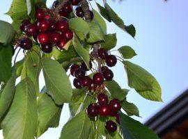 Raisins à maison en balles de paille Felcerossa