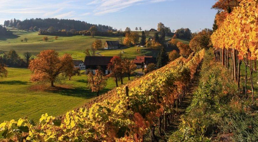 Goût et durabilité dans les vignobles