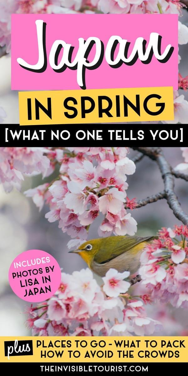Ce que personne ne vous dit sur le printemps au Japon: où aller, quoi emporter (et comment éviter les foules)   Le touriste invisible x Lisa au Japon