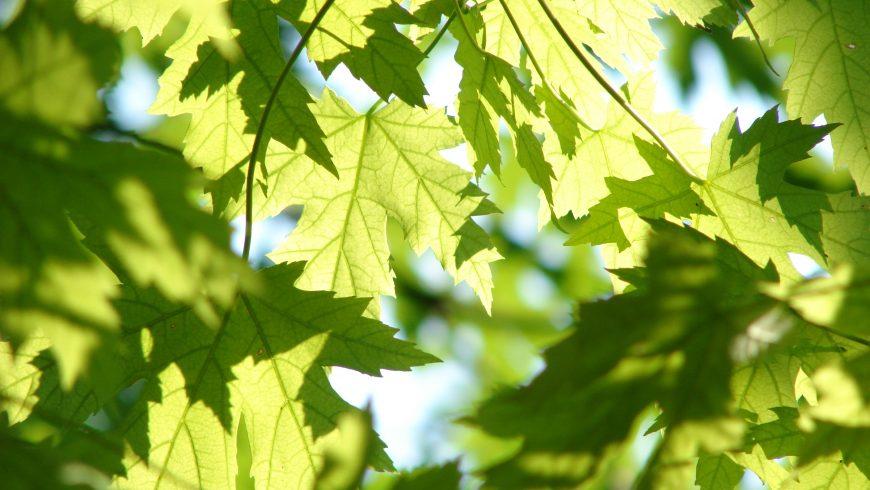 Marketing vert: comment commercialiser votre entreprise écologique