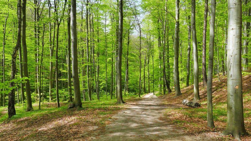 Beechwood dans le parc national des Monti Sibillini