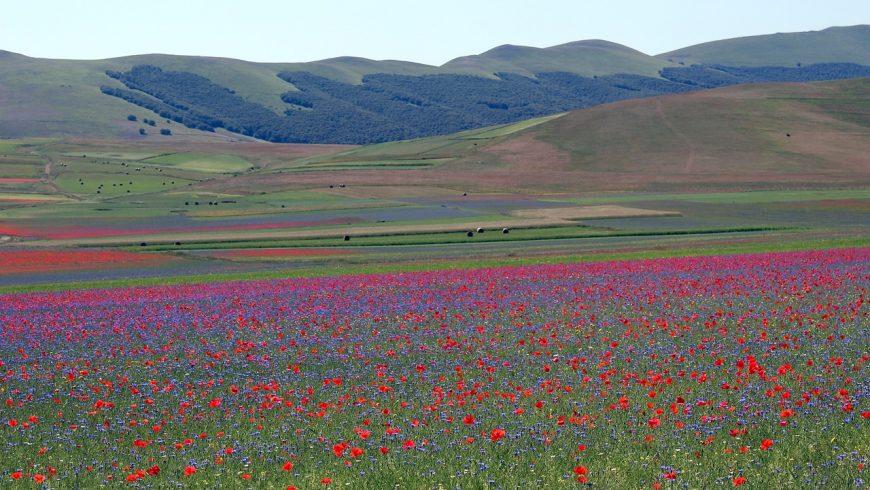 Fioritura (floraison)