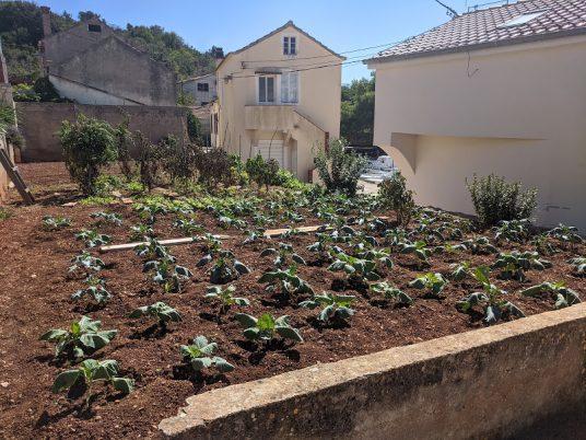Jardinage biologique de l'île de Rava