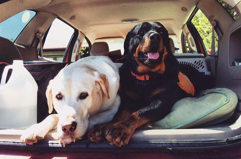 Sept conseils pour mieux voyager avec votre chien