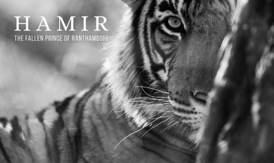 Comment un tigre a appelé Hamir a été l'inspiration pour un livre de table basse