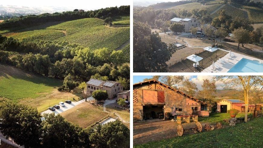 ferme biologique parmi les vignobles et les collines des Marches