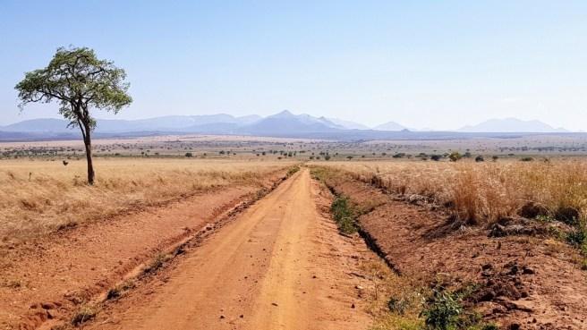 Parc national de la vallée de Kidepo. (Image fournie par Iain Patton & UP!)