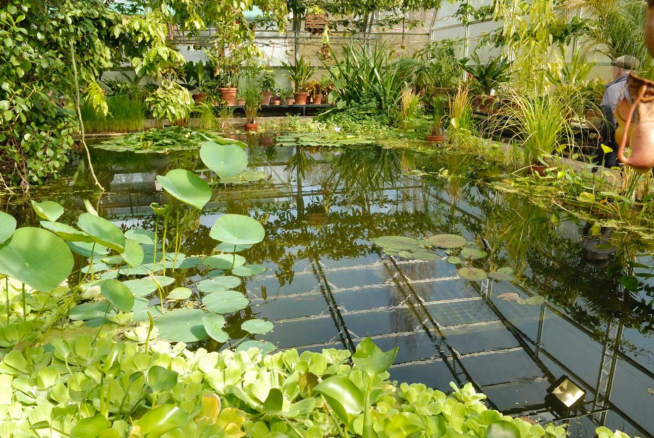 11 choses à faire à Oxford Botanic Garden