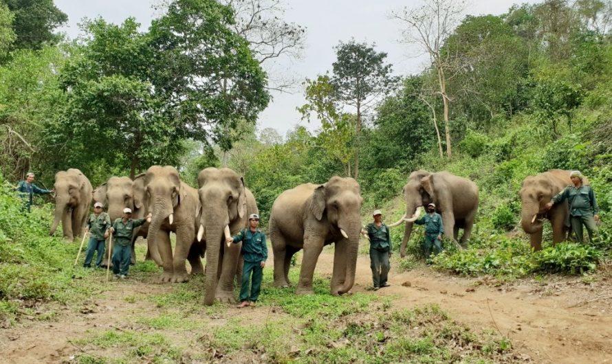 Les Mahouts comptent: les travailleurs essentiels du Elephant Conservation Center